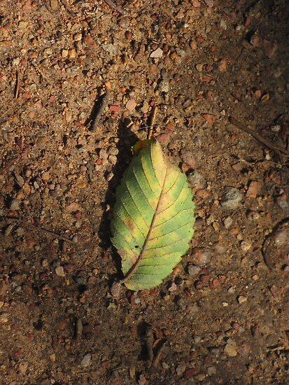 """Leaf on Rock Path"" by dfrahm"