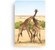 Maasai Giraffes. Males Necking. #2. Maasai Mara, Kenya   Canvas Print