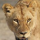 A battle tested lioness! by jozi1