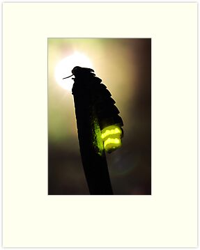 Glow-worm by jimmy hoffman