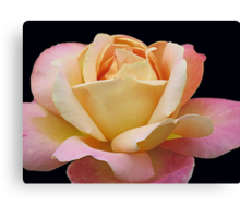 Gracious Rose Canvas Print