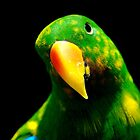 Male Eclectus Parrot by Tamara  Kenneally