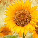 Sunflowers by Beth Mason