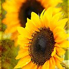 Textured Sunflower by Beth Mason
