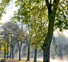 Misty Towpath by Mark Zytynski