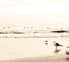 Antique Gulls by Lina