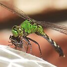 Green Dragonfly with Fly by SusieG