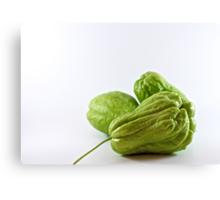 Three green chokos Canvas Print