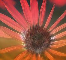 DreamEchinacea by RosiLorz