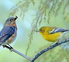 Bluebird meets Warbler by Bonnie T.  Barry