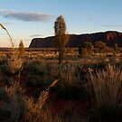 Early Light on Uluru by Cathy  Walker
