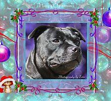 CC108 - Staffordshire Bull Terrier by zitavaf