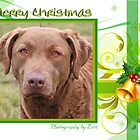 CC66 - Chesapeake Bay Retriever by zitavaf