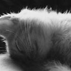 Sleepy Kitty by brookexx09