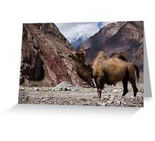 Camel on the Karakoram Highway Greeting Card