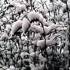 coat of snow by HollyNewts