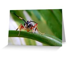 Wasps Are Our Friends Greeting Card