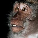 Balinese Macaque (Macaca fascicuiaris) by Chris Westinghouse