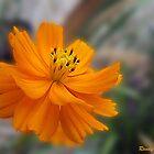 Orange Beauty by ldermid75