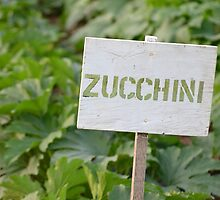 Zucchini - Eagle Heights Community Garden by mjparsons