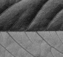 The leaf 2985 by João Castro