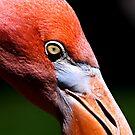 Close-Up by David Lampkins