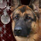 CC127 - German Shepherd Dog by zitavaf