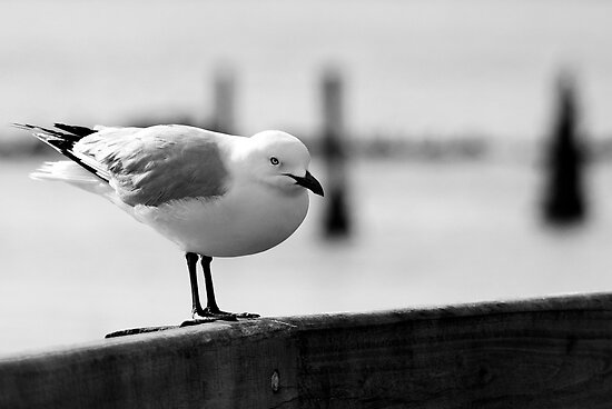 resting on the boardwalk by Clare Colins