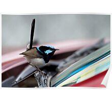Superb Fairy Wren  (Malurus cyaneus) and my Car 2 Poster