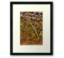 Bushland Dreaming - Somewhere Near Oberon, NSW  - The HDR Experience Framed Print