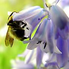 A Carpenter In The Blue Bells...  by Donnie Voelker
