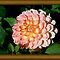 A Dahlia the Color of Peaches and Cream by SummerJade