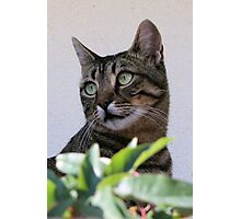 Tabby Cat Sitting In The Shade Behind Passiflora Vine Photographic Print
