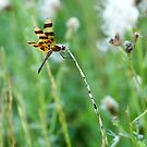 Halloween Pennant by KBritt