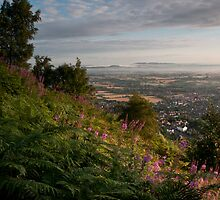 Dawn in Worcestershire by Cliff Williams