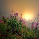 Cascades Fog and Fireweed by Charles &amp; Patricia   Harkins ~ Picture Oregon