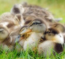 Bundle of Fluff by Curtis  Sheppard