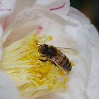 Bee Doing his Thing by Linda Fury