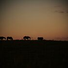 Horses at Sunset by Becky Trudell