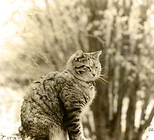 Memories of Kitty ... by Chris Armytage™
