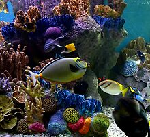 Fishville - New England Aquarium by redscorpion