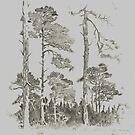 Tall Trees by WienArtist