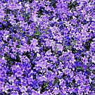 The Color Purple by Loree McComb