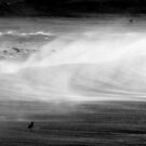 Steely Offshores, Dee Why, Sydney by BGpix