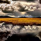 Klamath Marsh Afternoon - USA - by Charles &amp; Patricia   Harkins ~ Picture Oregon