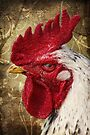 The rooster by AD-DESIGN