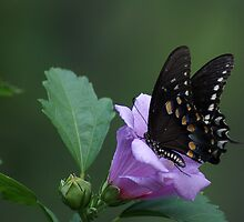 Butterfly Heaven by Rick  Friedle