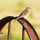 Sparrow on old hay rake by SusieG