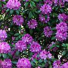 Flowers by Tammy Devoll