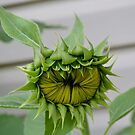 About to Bloom by Eileen Brymer